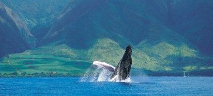 morewhales